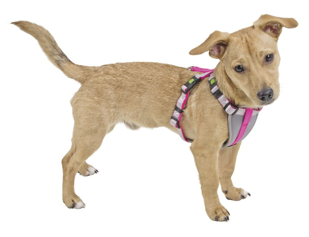 Geschirr für kleine Hunde S neon pink